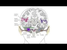 How APD happens within the Brain - YouTube