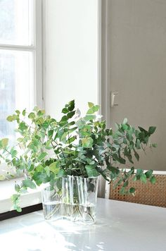 The Aalto Vase, also known as the Savoy Vase, is a world famous piece of glassware and an iconic Finnish design created by architect Alvar Aalto and his wife Ai Green Plants, Green Flowers, Ikebana, Flower Vases, Flower Arrangements, Alvar Aalto, Arte Floral, Scandinavian Design, Houseplants