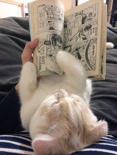 Cat, reading