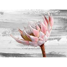 """Protea&Fynbos"" print set - prints (prints only) by Natascha van Niekerk Fine Art Photography Protea Art, Protea Flower, Flowers, Flower Images, Flower Pictures, Flower Art, Succulent Wall Art, Pallet Painting, Botanical Illustration"