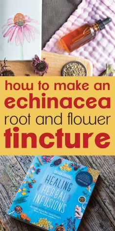 Making your own echinacea tincture is an easy way to stay healthy and recover from sickness quickly. Learn about echinacea benefits, the uses of echinacea, and how to make a tincture out of the echinacea purpurea plant here! Healing Herbs, Medicinal Plants, Herbal Tinctures, Herbalism, Herbal Tea, Herbal Remedies, Natural Remedies, Ways To Stay Healthy, How To Make Light