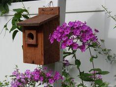 bird house, certified wildlife garden, pink phlox  by Gina Marino