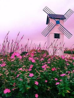 Windmill in a field of pink flowers Pink Love, Pretty In Pink, Pink And Green, Pink Windmill, Dutch Windmill, Beautiful World, Beautiful Places, Le Vent Se Leve, I Believe In Pink