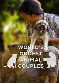 World's Oddest Animal Couples US (2015) - Dr. Carin Bondar introduces unusual animal friendships, such as an elephant who leads a buffalo herd, a jackal caring for an elderly dog and more.