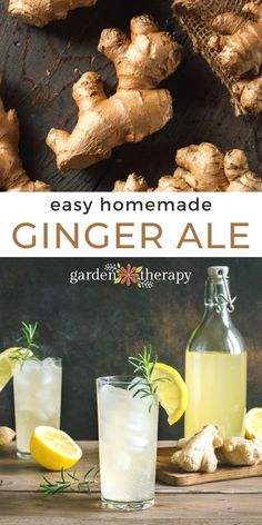 It's time to make an old school favourite: homemade ginger ale! If you've only ever had the 2-liter bottled version, you are seriously missing out. This version keeps all the medicinal properties of ginger intact for a zesty, fresh beverage. Here's a deep dive into how to make your own ginger syrup which you can then use to make ginger ale and a delicious ginger mint lemonade that I know you'll love. #gardentherapy #drinks #recipes #ginger #gingerale Ginger Syrup, Ginger Beer, What Is Ginger, Homemade Ginger Ale, Ginger Lemonade, Health Benefits Of Ginger, Lime Soda, Refreshing Summer Drinks, Dinner Dishes