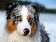 lovely snowy dog