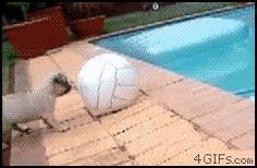 Ha! Stupid pug.