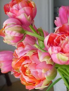 猫の散歩 — flowersgardenlove: Peony Tulips. Beautiful