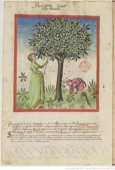 IBN BUTLÂN , Tacuinum sanitatis 15. Jhd Latin 9333  Folio 15v 15th Century Clothing, Bnf, Alphabet, Painting, Medieval Clothing, Clothing Accessories, Catalog, German, Art Deco