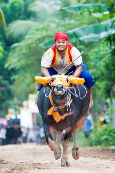 Buffalo Race at the Pchum Ben Festival, Vihear Sour Pagoda in Southern Kandal province, Cambodia. The Buddhists in Cambodia celebrate traditional Pchum Ben, or honoring-the-dead festival, which is the kingdom's second largest celebration after lunar New Year.