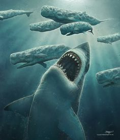 Megalodon was the biggest prehistoric shark that ever lived. Megaladon could bite down with 18 tons of force--ten times more force than the bite of a Great White Shark. It fed on whales, as you can see here. Megalodon Shark, Deep Sea Creatures, Digital Art Gallery, Extinct Animals, Prehistoric Creatures, Great White Shark, Shark Week, Sea Monsters, Whales