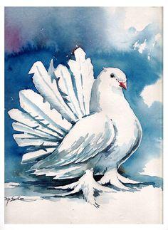 PIgeon watercolour