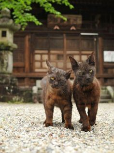 gangster kitties
