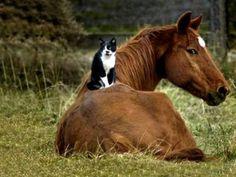 Vean como la naturalez coexiste
