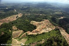 General Mills, Colgate-Palmolive announce deforestation-free policies for palm oil sourcing