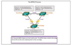 CCNA 3 Chapter 4 Cisco V5.03 Exam Answer 2016 100% #CCNA,#Exam Answers,#Routing,#Switching,#netacad,#cisco,#Network,#Internet,#Ethernet,CCNA1,CCNA2,CCNA3,CCNA4,#CCNA1,#CCNA2,#CCNA3,#CCNA4,CCNA,CCNA5,Cisco,Exam Answer,Exam Answer 2016,Routing and Switching,R & S,Network,Internet,Ethernet,ccna salary,ccna training,ccna5ccnp,ccna practice,ccna final, My site :  http://ccna5netacad.com/exam-answer/ccna-3-chapter-4-exam-answer/ My Website : http://ccna5netacad.com/