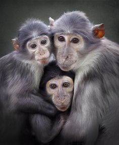 3 by Carles Just Animals And Pets, Baby Animals, Cute Animals, Beautiful Creatures, Animals Beautiful, Los Primates, Magnificent Beasts, Mundo Animal, All Gods Creatures