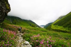 A Detailed Guide to Valley of Flowers Trek | Thrillophilia.com