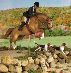 MODEL HORSE FOX HUNTING - Google Search