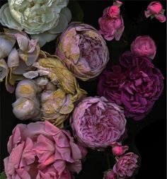 eccentric Kollector beautiful floral color