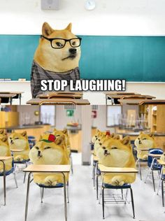 the new age of doge is here. submissions/asks open Stupid Memes, Dankest Memes, Funny Jokes, Hilarious, Doge Dog, Doge Meme, Funny Animal Pictures, Funny Images, Funny Animals