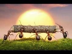 trabajo en equipo - Con la aportación de la fuerza de cada hormiguita se consigue llevar el mismo objeto.