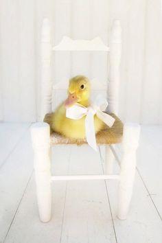 Duck Photography Nursery Decor Baby Girl by AmyTylerPhotography, $30.00
