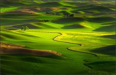 """Lone Tree, Palouse Hills"" by Chip Phillips - I would love to wake up to this every morning."
