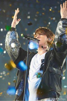 Yoko, Idol, Concert, Twitter, Bear, Concerts, Bears