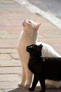 Cats in Crete, Greece White Cats, Black Cats, Pretty Cats, Beautiful Cats, Anatole France, Crete Greece, Warrior Cats, Kitty Kitty, Cat Love