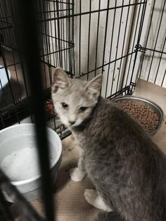 VIOLA HAS BEEN RESCUED !! THE 1247TH CAT RESCUED FROM CCAC IN 2015  9 OCT @3PM ET - PULLED FOR RESCUE BY COLUMBUS HUMANE SOCIETY FOR LOCAL MAINTAINED FERAL PLACEMENT.