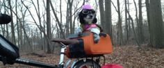 Petunia The 'Wonder Dog' To Embark On Coast-To-Coast Biking Adventure