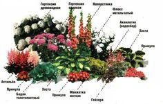 цветники из многолетников своими руками схемы: 21 тыс изображений найдено в Яндекс.Картинках