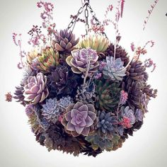 Pin von Leslie Harvey auf Succulents, flowers, trees & plants ...