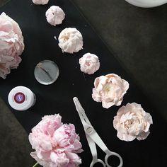 ㅡ peony 만들다보니 예뻐서 꽃이 피어나는 자연스러운과정 ㅡ 수많은 법칙으로 피어나는 나의 꽃들아. ㅡ #flower #cake #flowercake #partycake #birthday #weddingcake #buttercreamcake #buttercream #designcake #soocake #플라워케익 #수케이크 #꽃스타그램 #버터크림플라워케이크 #베이킹클래스 #플라워케익클래스 #생일케익 #수케이크 #작약 #peony www.soocake.com vkscl_energy@naver.com