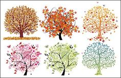 6 Beautiful Trees Vector Graphics