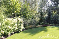 Ogród z lustrem - strona 315 - Forum ogrodnicze - Ogrodowisko Plants, Plant, Planets