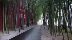 Bamboo alley by joelpk, via Flickr