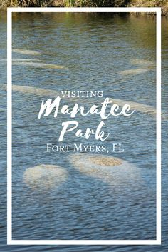 Mantee Park in Fort Myers, Florida is a great place to see manatees in their natural habitat.