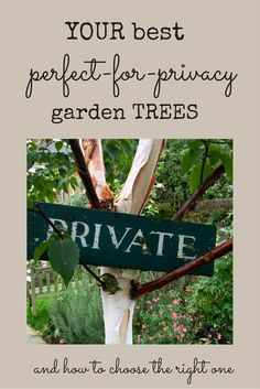 The 8 best perfect-for-privacy garden trees - Meadow Garden Garden Privacy Screen, Privacy Plants, Privacy Trees, Privacy Landscaping, Garden Landscaping, Best Trees For Privacy, Privacy Fences, Landscaping Design, Patio Design