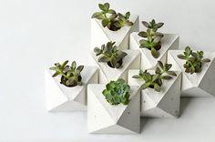 Vaso Concreto Geométrico + cactos e suculentas