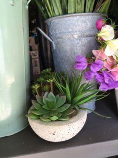 Cute faux succulent in beige pot Faux Succulents, Faux Flowers, Beige, Seasons, Plants, Style, Fake Flowers, Swag, Seasons Of The Year