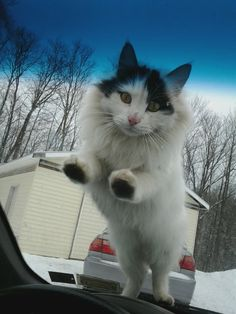 really, cat, this is getting old. im late for work. cant you go jump on the other car?