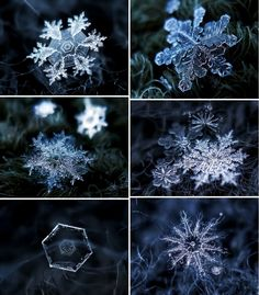 High definition pictures of snowflakes.