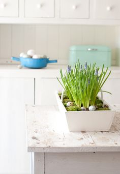 Spring in Minty House, blue, white, mint, minty, spring flower, Ib Laursen