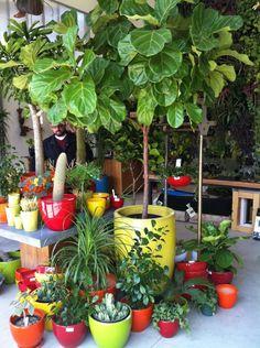 Flower Shop in San Francisco, CA