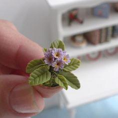 Lovely Purple Primrose Flowering Plant in Clay Pot - Dollhouse Miniature Flowers   eBay
