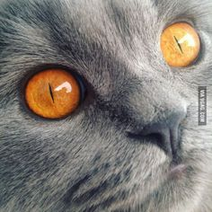 Should I be worried that my cats eyes look like sauron?