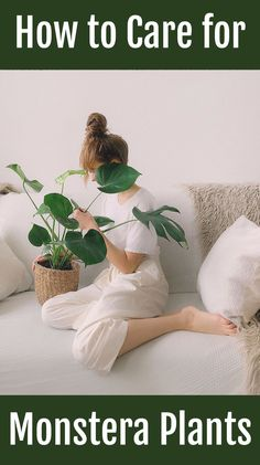Monstera deliciosa, also known as swiss cheese plants, are native to tropical fo… - House Plants House Plants Decor, Plant Decor, Popular House Plants, Swiss Cheese Plant, Cat Plants, Plant Tattoo, Plants Are Friends, House Plant Care, Monstera Deliciosa