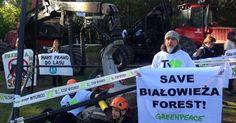 Aktywiści Greenpeace, Dzikiej Polski i Pracowni na rzecz Wszystkich Istot i przedstawiciele lokalnej społeczności (sześć kobiet i ośmiu mężczyzn) blokowali sprzęt do wycinki drzew – dwie potężne maszyny (harvester i forwarder). Chcieli uniemożliwić im wyjazd do pracy. Przed 6.00 rano 8 czerwca 2017 protestującyotoczyli maszyny białą plastikowa taśmą, rozstawili namiot, na metalowych trójnogach rozpięli banery. …